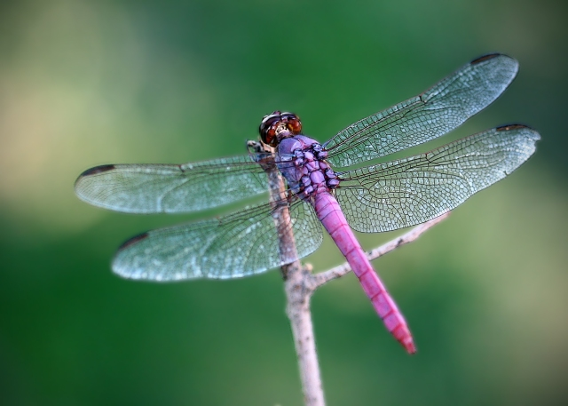 dragonfly-1365054
