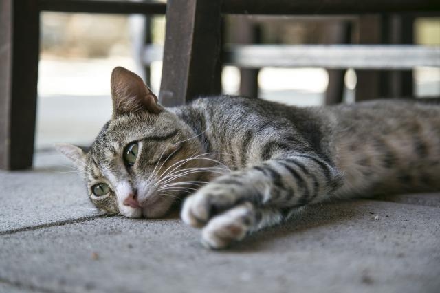 cat-1542856_1920