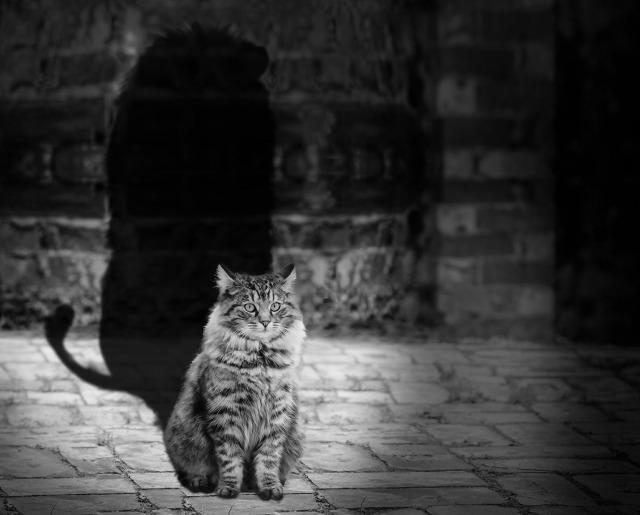 cat-564202_1920