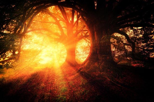 trees-2562083_1920